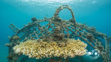 7 comportements pour améliorer vos photos sous-marines