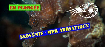 Pratique Macro sur la côte Adriatique Slovène (Vidéo)